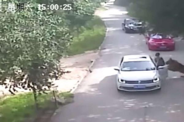 Tiger kills woman at Beijing wildlife park