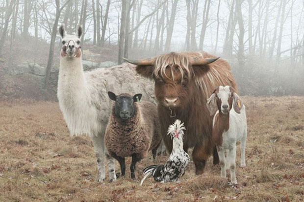 Animals about to drop a sick mixtape